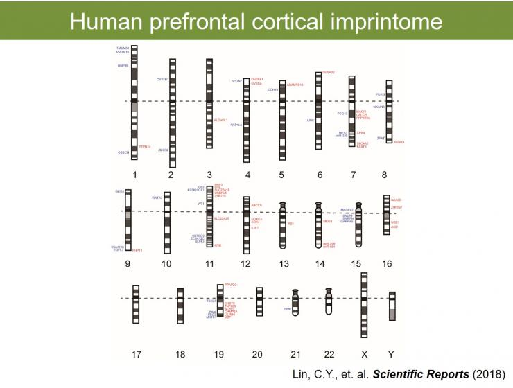 Human prefrontal cortical imprintome